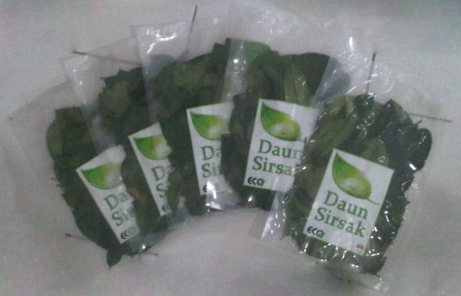 Dried_Soursop_Leaves_Vacuum_Packaging_